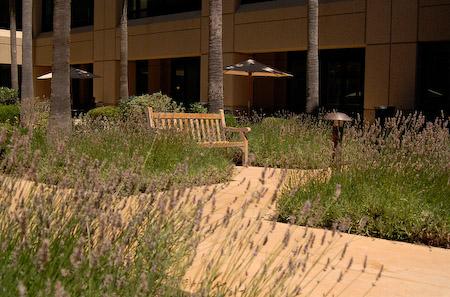 Mexican Landscape Architect Landscape Architect John