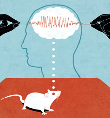 Mouse and brain illo