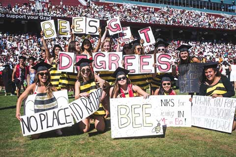 Commencement - bees